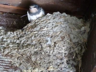 Desde la seguridad del nido